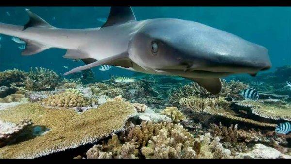 В США создали манипулятор для сбора глубоководной морской фауны