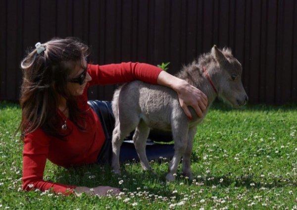 В Санкт-Петербурге впервые покажут коня размером с кошку
