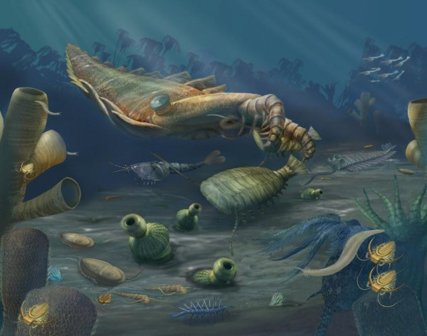 Ученые: Царство животных появилось намного раньше, чем считалось