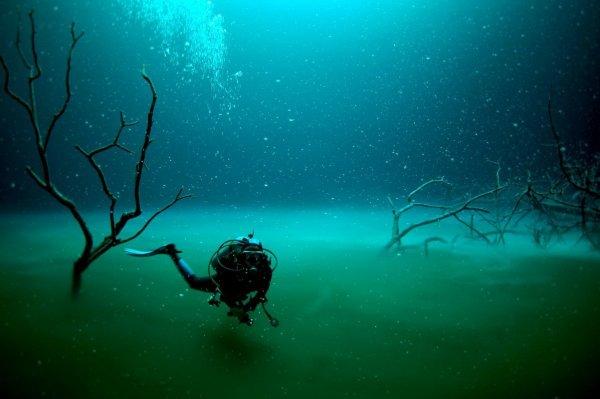 Экологи: Над Черным морем нависла угроза экологической катастрофы