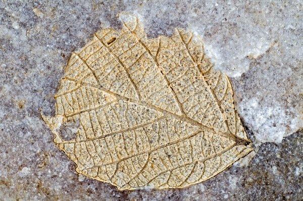 Древняя окаменелость, считавшаяся растением, оказалась животным