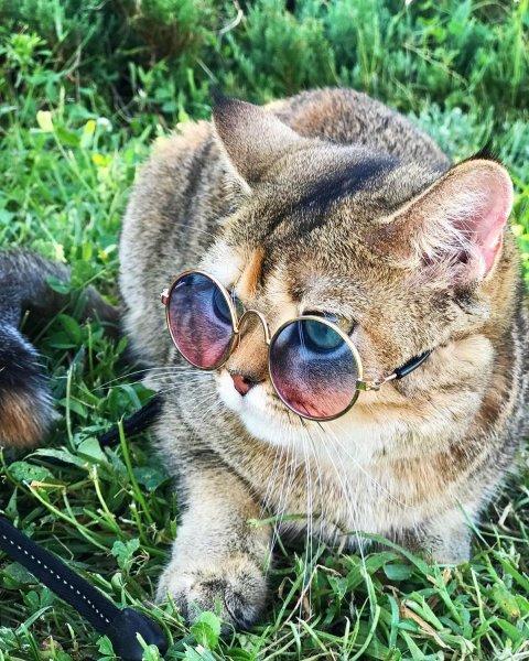 Кошка-блогер Миа из Краснодара покоряет Instagram