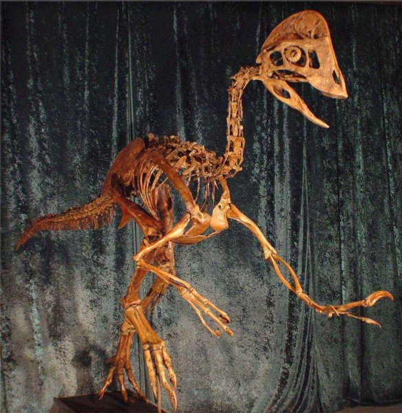 Ученые нашли промежуточного животного между динозаврами и птицами