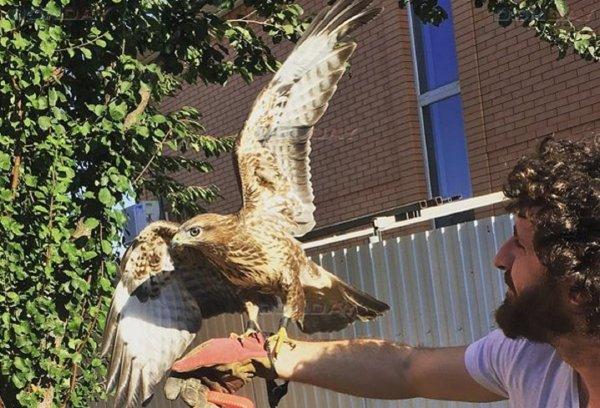 Супруги из Ростова организовали приют для пострадавших хищных птиц