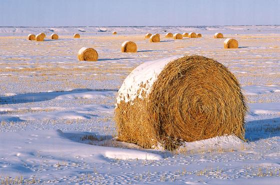 Тюменец нагрянул к соседям, чтобы украсть сено