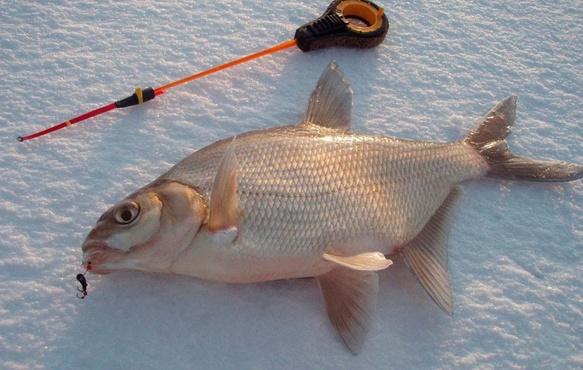 Тюменским любителям рыбы подсказали, как избежать серьезных проблем со здоровьем