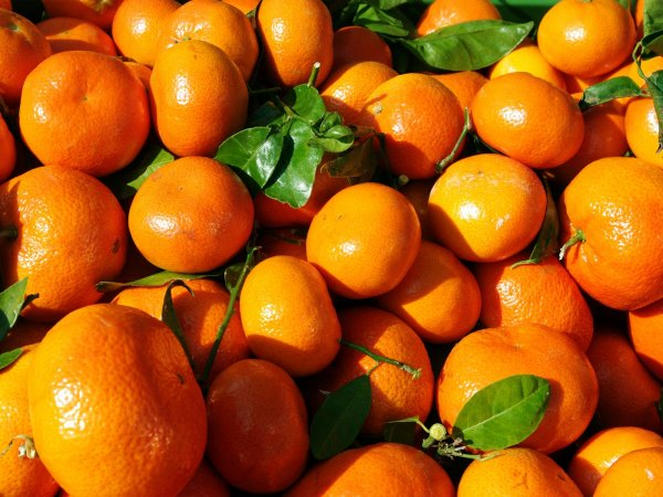 Температура, реанимация, смерть: Роспотребнадзор проверяет зараженные китайские мандарины