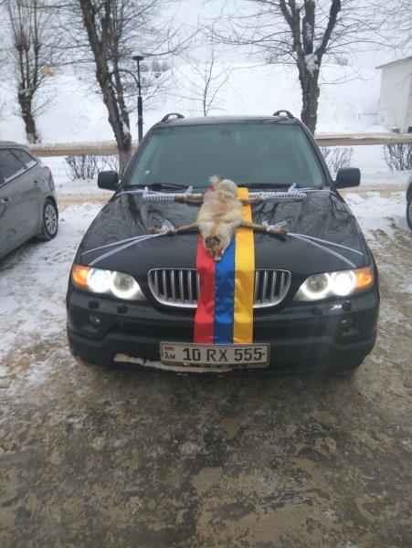 «Вот это украшение!»: Свадебный BMW X5 с чучелом лисы на капоте шокировал сеть