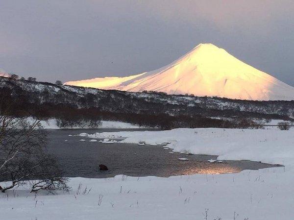 Камчатский медведь Жрун-2 отказался от зимней спячки из-за еды