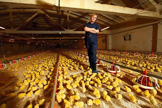 Тюменская птицефабрика надеется реализовать важный для предприятия проект