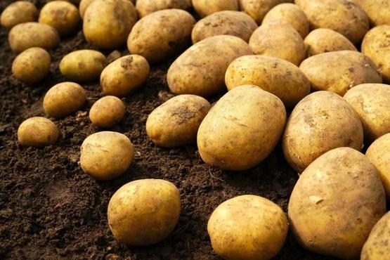 В Тюменской области строительство завода по переработке картофеля выходит на финишную прямую