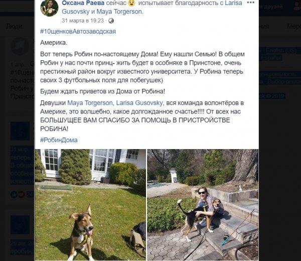 «Почти принц»: Дворняга из приюта Москвы поселилась в особняке в США