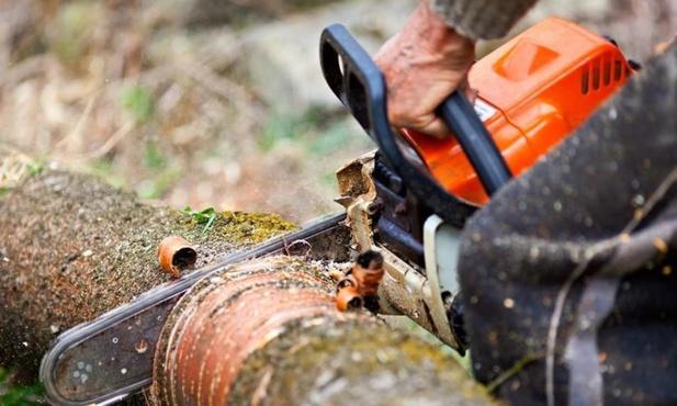 Из-за неосторожности отец-лесоруб придавил деревом 11-летнего сына