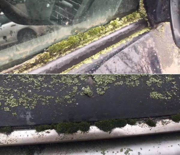 «Можно помидоры сажать»: Забытый на шесть лет Toyota Land Cruiser 200 поразил сеть
