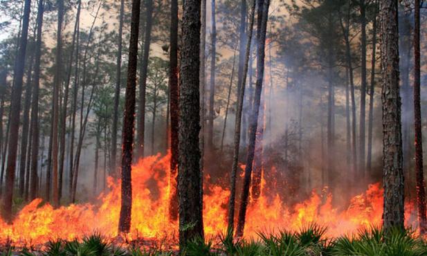 Жители Тюменской области стали виновниками десятков лесных пожаров