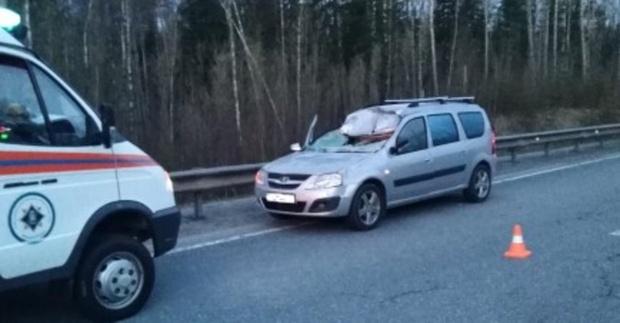 Пассажир легковушки погиб в столкновении с лосем на трассе Тюмень - Ханты-Мансийск