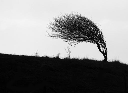 В субботу, 4 мая, сильнейший ветер будет бушевать в Тюменской области и ХМАО