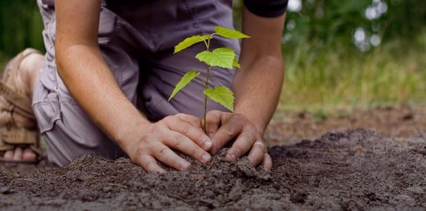 Тюменцы высадят несколько сотен деревьев