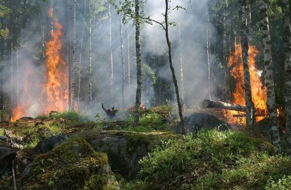 В Тюменской области мальчик поджег лес. Возместить ущерб придется его родителям