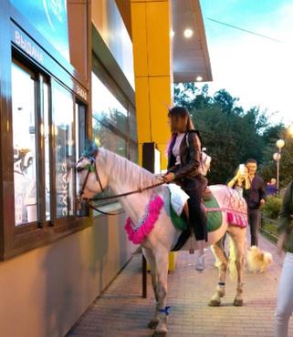 В тюменский ресторан проникла живая лошадь: фото