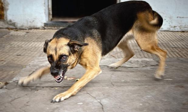В Тюменской области бездомная собака напала на ребенка, который шел домой из школы