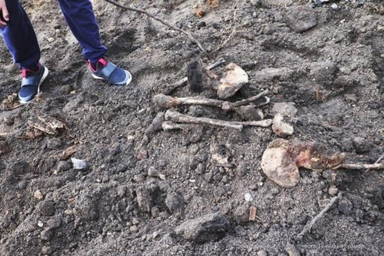 Три мешка костей: жители Тюменской области нашли массовое захоронение - фото