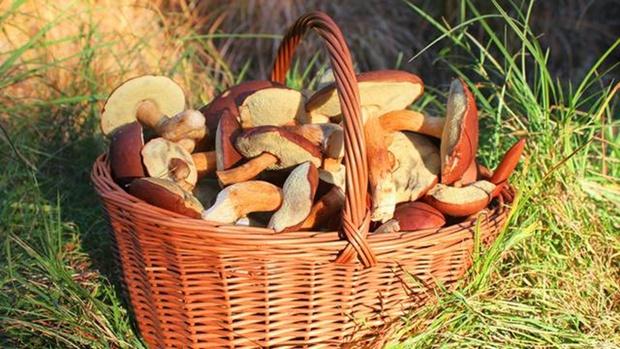 От отравления грибами погибли 11 человек