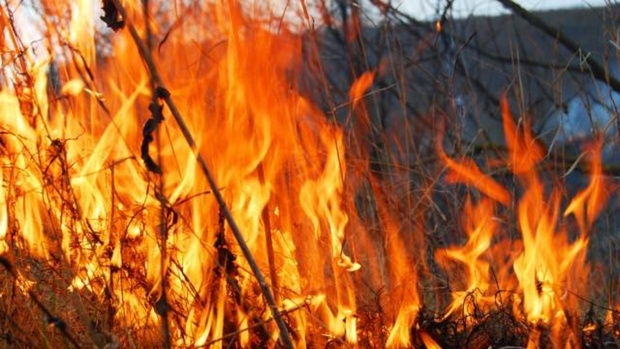 В ходе тушения пожара в лесу пропал пожарный