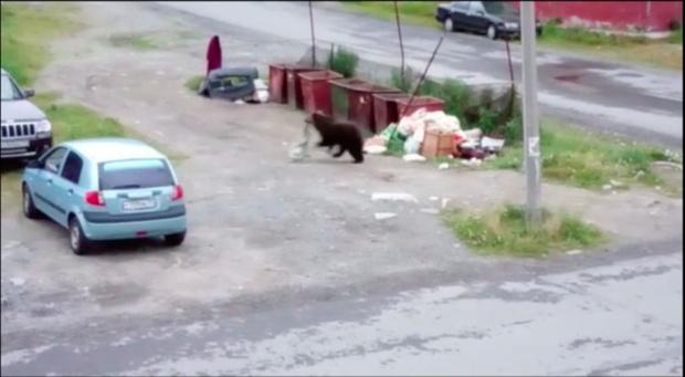 Медведь напал на мусорные баки в Свердловской области