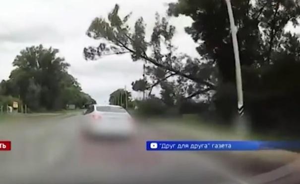 Водитель чудом остался жив, благодаря своей реакции – видео