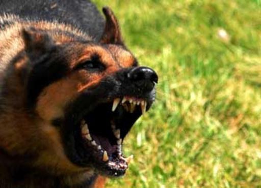 Домашняя собака загрызла годовалого мальчика