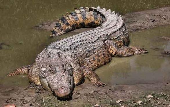 Крокодил съел 15-летнего подростка