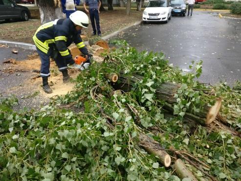 В Тюмени пострадал мужчина, который оттаскивал поваленные деревья с тротуара