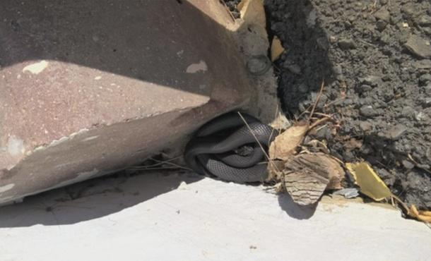 Тюменцы нашли змею во дворе дома - фото