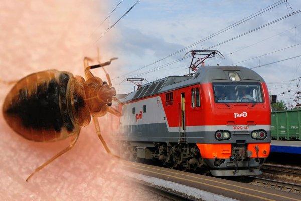 «Теперь чешемся»: Москвичи обозлились на РЖД за клопов в поезде